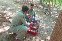 14 بطانه سنجاب در منطقه حفاظت شده سروآباد رها سازی شد
