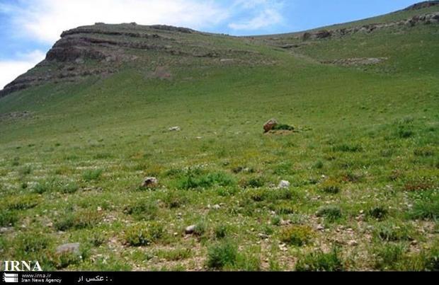 خراسان رضوی جزو استانهای موفق در ارتقا کیفیت مراتع است