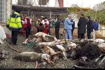 محموله گوشت هواپیمای باری حادثه دیده معدوم می شود