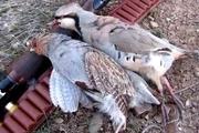 شکارچی غیرمجاز در جیرفت بازداشت شد