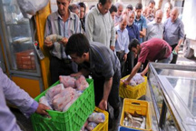 آغاز توزیع کالاهای اساسی تنظیم بازار ماه رمضان در کردستان