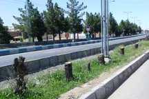 توضیح شهردار همدان درباره قطع درختان بلوار آیت الله نجفی