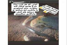 ناشر عکس روباه شکار شده در فضای مجازی دستگیر شد