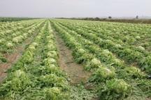 باغ ها و مزارع فارس 1470 میلیارد تومان از سرمای بهاره زیان  دید