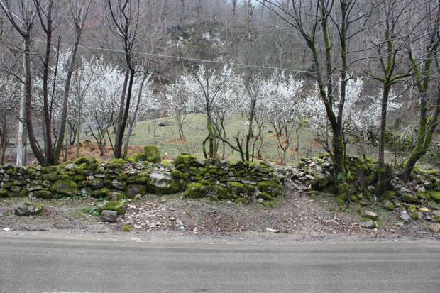 از برف و بوران تا شکوفه های بهاری در جاده خلخال - اسالم