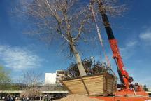 جابه جایی و کاشت 2 درخت کهنسال در شهرکرد