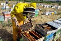 تولید 368 تن عسل در جنوب کرمان