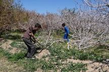 غرامت کشاورزان خراسان جنوبی 166 میلیارد ریال است