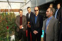 کشت گیاهان دارویی در استان اردبیل حمایت می شود