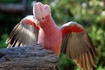 43 پرنده وحشی قاچاق دراصفهان کشف شد