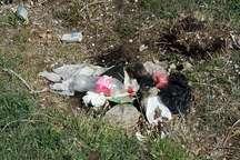 مصائب ریختن زباله در طبیعت
