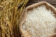 سال طلایی تولید برنج؛ بارندگیها هیچ تأثیری برقیمت برنج نخواهد گذاشت