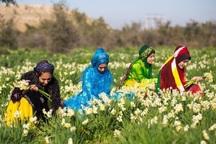 بهار نرگس زارهای خوسف