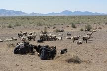 106 میلیارد تومان برای رسیدگی به مناطق عشایری اختصاص یافت