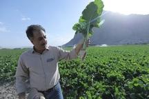 پرداخت مطالبات کشاورزان اولویت اول شرکت قند بیستون است