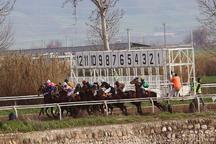رقابت 53 راس اسب در هفته 27 مسابقات اسبدوانی گنبدکاووس