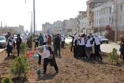 طرح درختکاری در بوستان معلم قزوین برگزار شد
