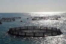 سرمایه گذاران پرورش ماهی در قفس حمایت می شوند