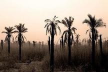 حقابه نخلستان ها در خوزستان فراموش شده است