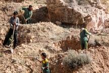 300 اصله نهال جنگلی در ارتفاعات تنگ خور لارستان کاشته شد