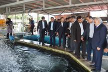مهمترین مشکل پرورش ماهی مازندران، بازار فروش و عرضه است