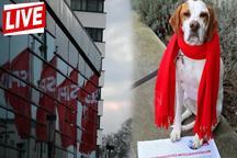 سگی که در انتخابات کاندید شد+ عکس