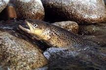 صادرات 17 تن ماهی قزل آلا از اصفهان به امارات