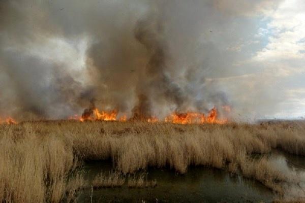 آتشسوزی هورالعظیم صددرصد عمدی بود  رتبه اول را در فرسایش آب و خاک در دنیا داریم