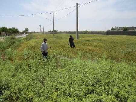 962 خانوار یزدی، مشمول بازنشستگی پیش از موعد صندوق بیمه کشاورزان شدند