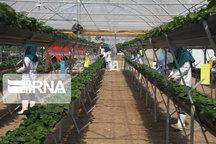 ۱۴.۹ میلیارد ریال تسهیلات رونق برای ۲۰ طرح کشاورزی مصوب شد