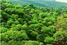 فائو خود را نسبت به حفاظت از محیط زیست و جنگلهای زاگرس متعهد می داند