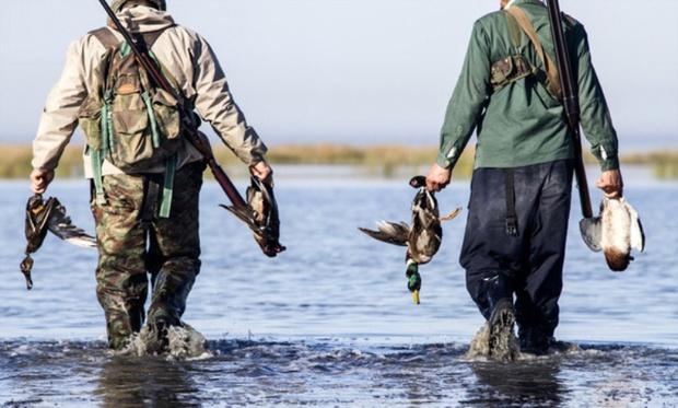 ورود مدعی العموم به شکار غیرمجاز پرندگان در مازندران