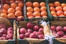 یک هزار تن سیب و پرتغال در کرمانشاه توزیع می شود