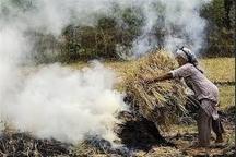آتش زدن کاه و کلش اقدامی باخت-باخت در گیلان