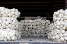 ۲ بارانداز عرضه مستقیم محصولات کشاورزی در تهران راه اندازی میشود