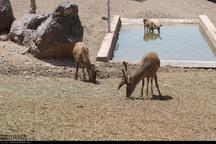دهکده طبیعت به رونق گردشگری قزوین افزوده است