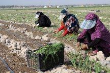 تدوین سند چشم انداز کشاورزی جنوب کرمان ضروری است