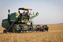 پیش بینی خرید تصمینی ۶۰۰ هزار تن گندم مازاد بر نیاز زراعین آذربایجان غربی