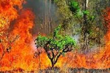 مدیرکل منابع طبیعی خوزستان: یک چهارم جنگل سوزی های کشور در خوزستان رخ می دهد