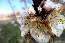 طرح خطرپذیری سرمازدگی محصولات کشاورزی در خراسان شمالی ضروری است