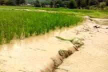 بارندگی و تگرگ 180 میلیارد ریال به بخش کشاورزی شوش خسارت زد