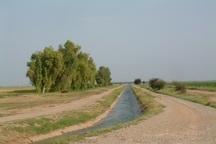آب محصولات تابستانه دارای قرارداد در شبکه آبیاری دز تامین می شود
