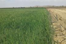 50 پروژه کشاورزی در ابرکوه آماده بهرهبرداری شد