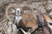 جفای شکارچیان به طبیعت