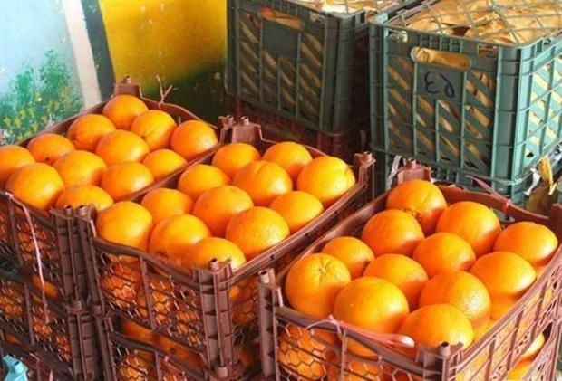 قیمت میوه تنظیم بازار شب عید خراسان شمالی تعیین شد