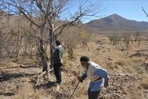 خشکسالی 30 هزار هکتار از زمین های کشاورزی بروجن را تهدید می کند