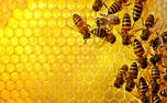 ۵۰ فایده عسل