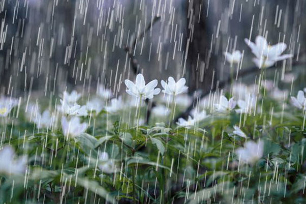 بوشهری ها جمعه منتظر باران خفیف و پراکنده باشند