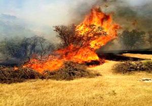 آتشسوزی در نیزارهای تالاب ولیعصر پلدختر  بررسی علت وقوع حریق از سوی کارشناسان