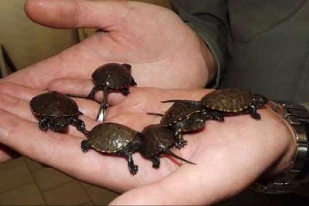 عرضه و فروش جانوران وحشی در آذربایجان غربی ممنوع است